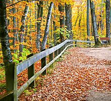 Beautiful Autumn Walkway by snehit