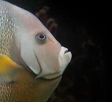 Fish close up   by snehit