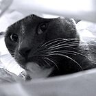 cat in a bag by tego53