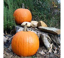 Pumpkin Time 7 Photographic Print