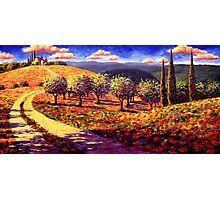 Tuscany Olive Grove Road Home Photographic Print