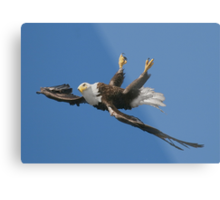 Mid Flight Flip Metal Print