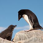 Adelie Penguin and Chick ~ &quot;Well......if you say so dad&quot; by Robert Elliott
