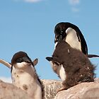 Adelie Penguin and chicks ~ &quot;and WHEN do I get fed!!&quot; by Robert Elliott