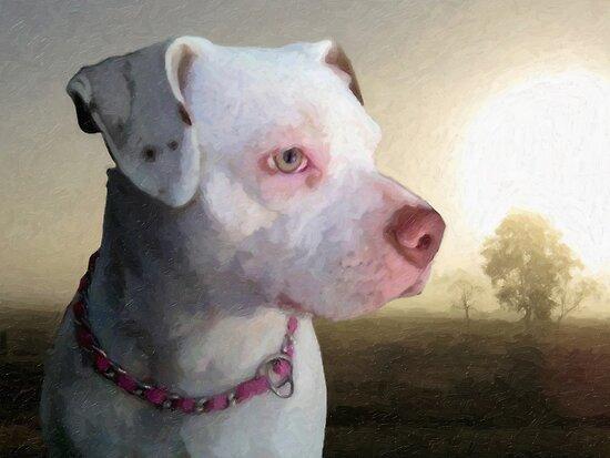 Bull Terrier a Dawn by Michael Tompsett