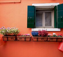 Window box, Burano - Italy by fionapine