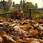 Leaf Litter by illman