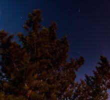 Moonlight by Daniel Wills