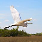 White Heron in Flight by njordphoto