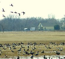 Pintail & Mallard Rest Stop by CJ Obray Metcalf