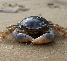 """Crab coming through! Hervey Bay, Queensland"" by Warren Fitzpatrick"