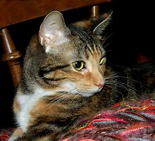 My Purrrrfect Daisy by godmommy5