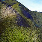 Wollumbin and Grass Trees by Lisa Martin