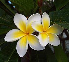 White & Yellow Frangipani by Angela Simpkin