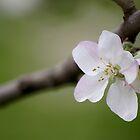 Spring dreaming by Denitsa Dabizheva