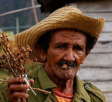Old Cuban farmer, Vinales, Cuba by buttonpresser