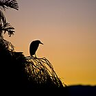 Heron at sunset, Marina Da Gama Cape Town  by wildshot