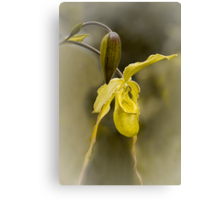First Bloom - Orchid Flower Canvas Print