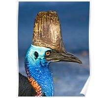 Cassowary - Etty Bay far north Queensland Poster