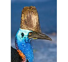 Cassowary - Etty Bay far north Queensland Photographic Print