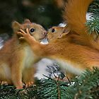 Red Squirrel Calendar by Sergey Bezberdy