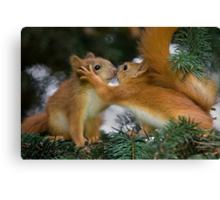 Baby Squirrel Kiss Canvas Print