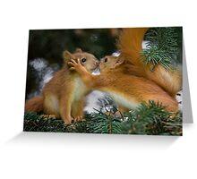 Baby Squirrel Kiss Greeting Card