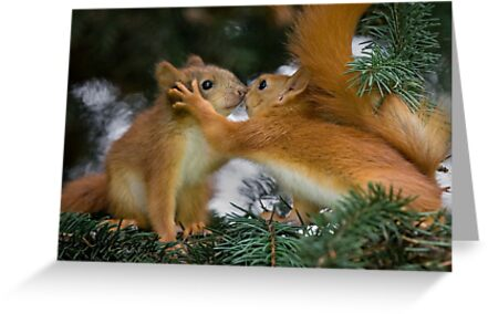 Baby Squirrel Kiss by Sergey Bezberdy