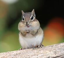 Praying For Peanuts by Gary Fairhead