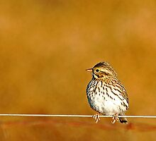 Bird on a Wire by Nick Conde-Dudding