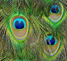 Peacock Feathers by Nick Conde-Dudding