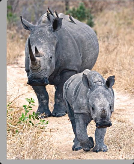The Rhino Walk by Michael  Moss