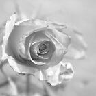Rose by Jennifer Saville