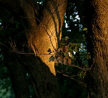 Late sun, Englewood Reserve, Ohio 2005 by jackmbernstein