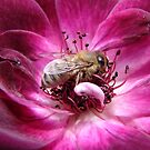 Buzz Buzz! Burgundy Iceburg Rose! by Gabrielle  Lees