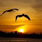 Pelicans at Sunset by Linda Godfrey