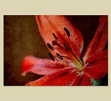 Red Lily by Marilyn O'Loughlin
