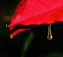 NATURE'S BEAUTY by ANNABEL   S. ALENTON