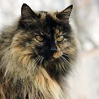 Kitty's Winter Coat by Jan  Tribe