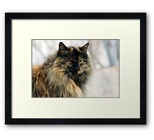 Kitty's Winter Coat Framed Print