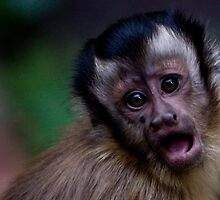 Baby monkey by rhofton