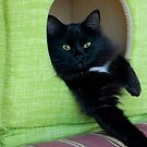 Cat House In Green  by Larry3