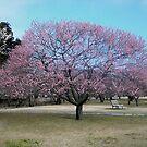 Plum blossom tree by KellyThomas