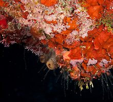 Coral and hydroids, Grand Cayman, 2010 by jackmbernstein