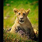 The Animal Kingdom by capturedjourney