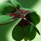 Green by Rowan  Lewgalon