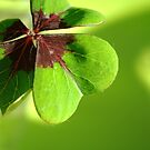 Shamrock Heart by TriciaDanby