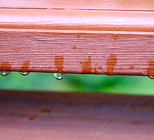 Green grass through wooden deck by redrob2000