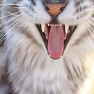 Feline Pearly Whites by BlackSwan