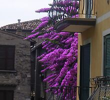 Balconies and Bougainvillaea by sstarlightss